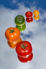 tomatoes-8