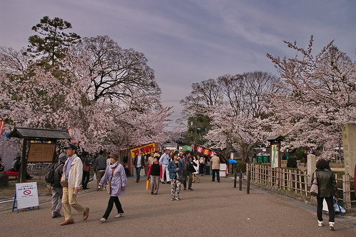 【写真】桜 : 円山公園(2)