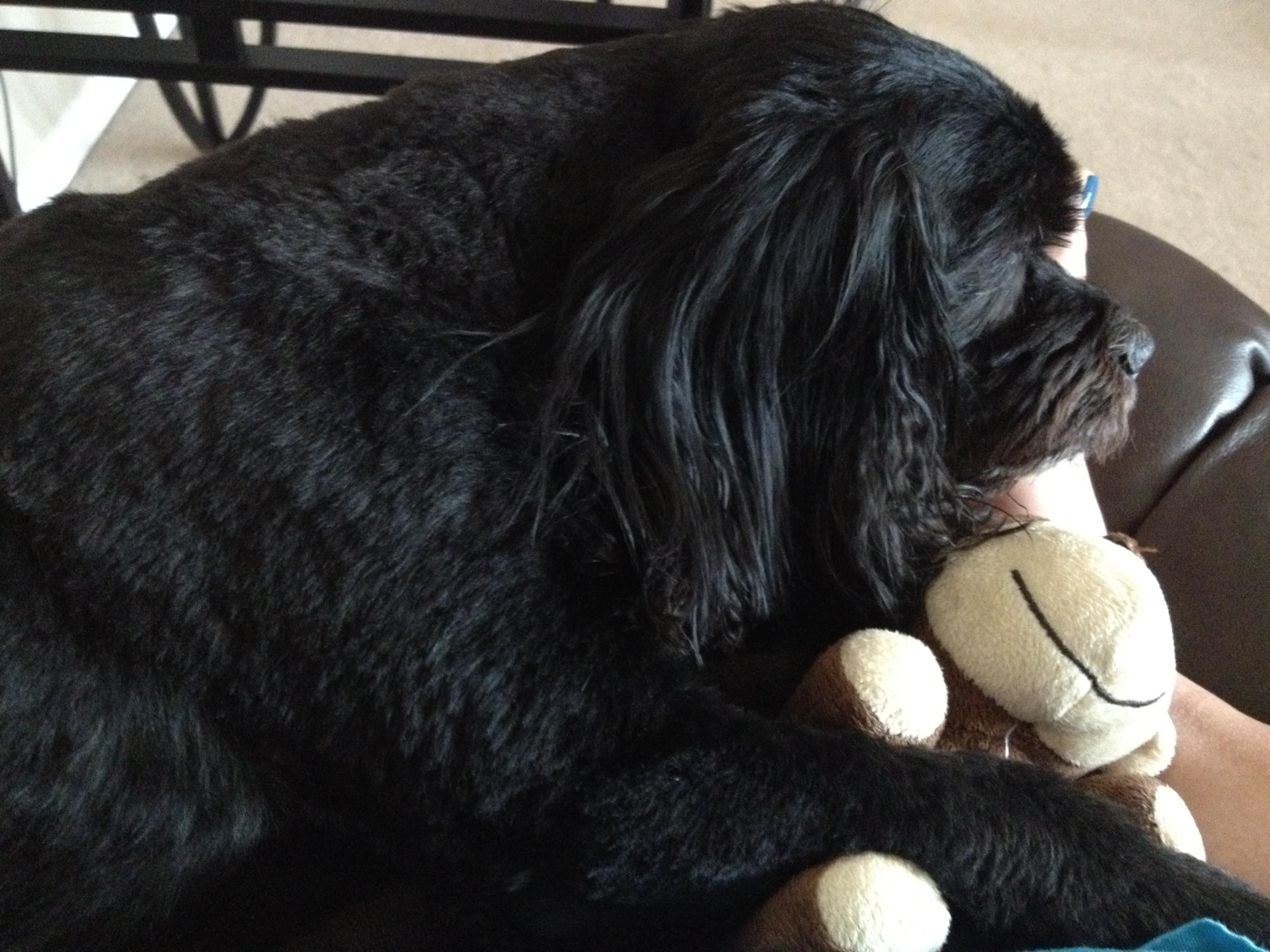 2012-06 Monty and Monkey