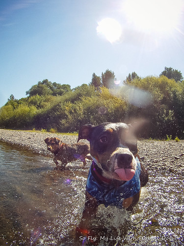 GoPro Under Water-6325