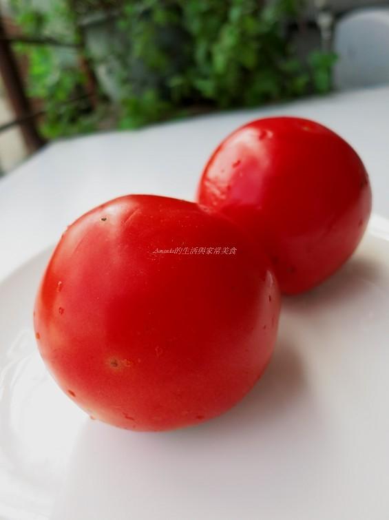 番茄蘋果膠 (2)