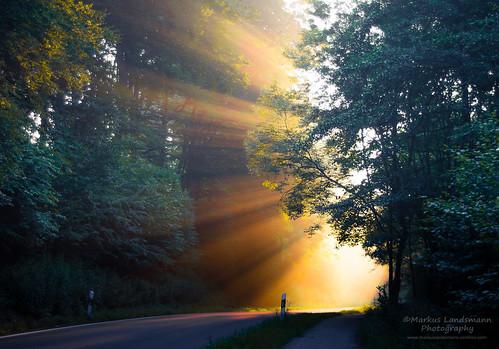 Natural spotlight
