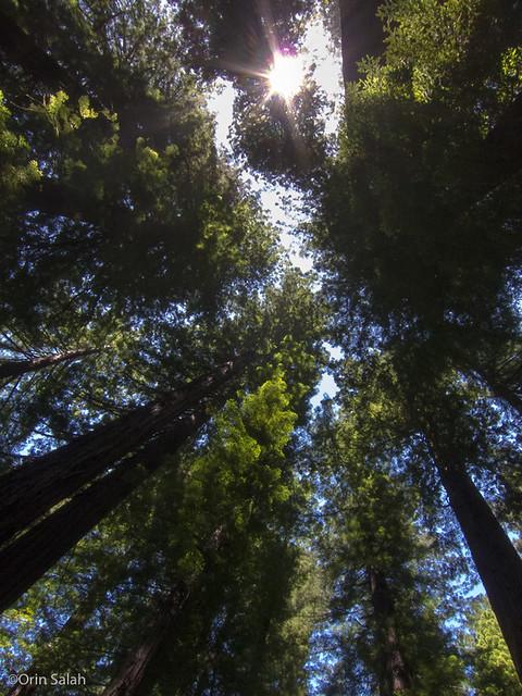 05Jul2013_redwoods-2622