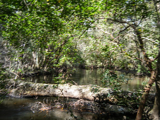 South Edisto River-058
