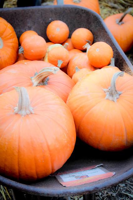 Pumpkin_2013-32