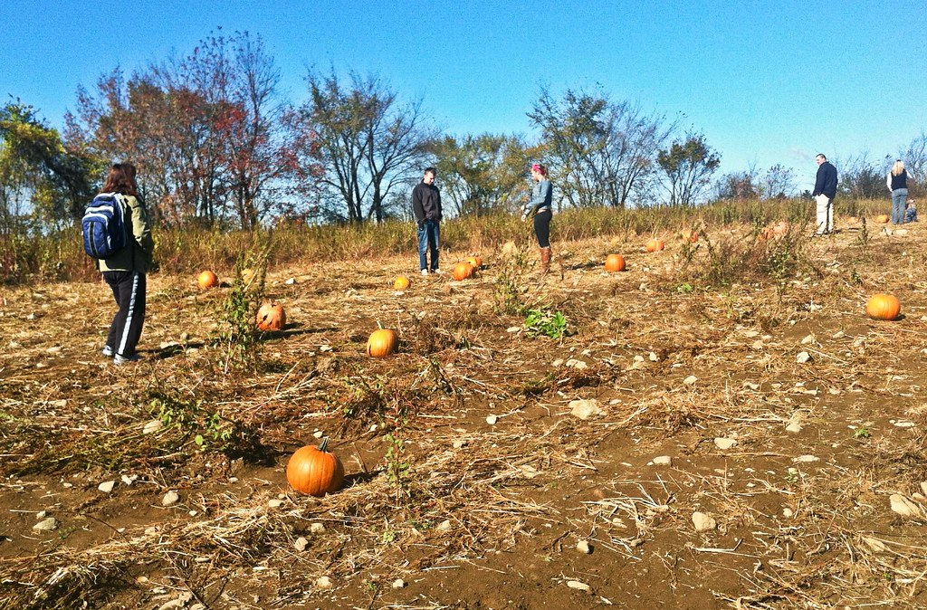 Pumpkin Patch 20131020-IMG_1034.jpg