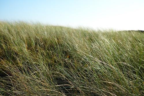 witte veld zandvoort