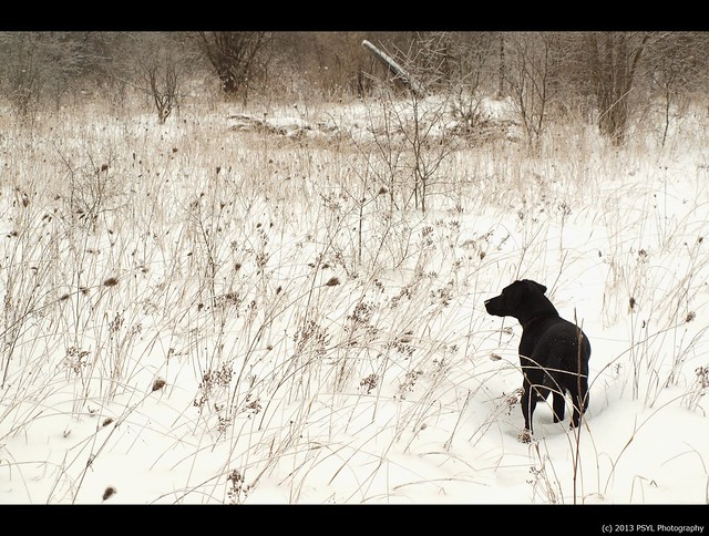 Black dog in white forest #1
