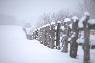 """""""Snow Field"""", United States, Colorado, Aspen"""