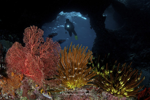 Boo Window scuba diving - Raja Ampat