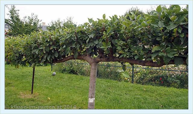 Paris jardin catherine laboure espaliered fruit trees for Jardin catherine laboure