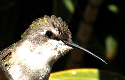 143431-1.jpg by Robert W Gilcrease