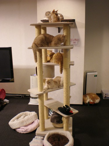 Cat Towers Full