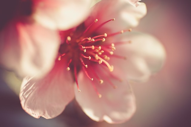 Spring Time 23