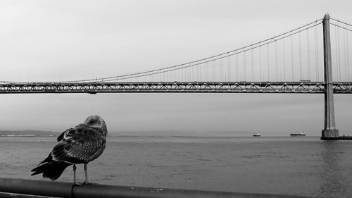 Seagull & Bay Bridge