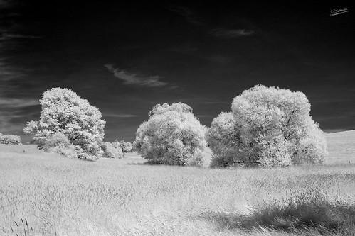Bäume-Infrared.jpg