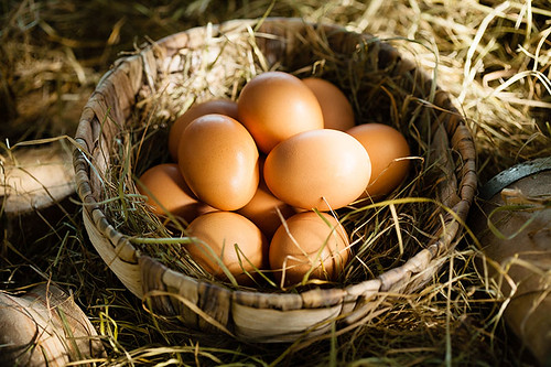 Organic Free-Range Eggs, Salt spring Island, Gulf Islands, British Columbia