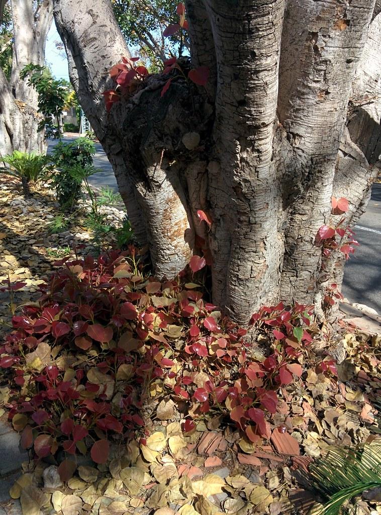 Осень-весна-черти что