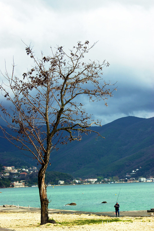 Дерево на берегу