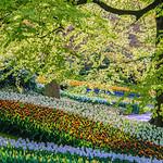 Keukenhof_2016_Zacher Garden