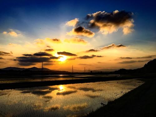 sunset sky cloud sun color reflection nature field sunshine weather colorful rice 日本 夕日 空 ibaraki 天気 田んぼ 2016 茨城 石岡