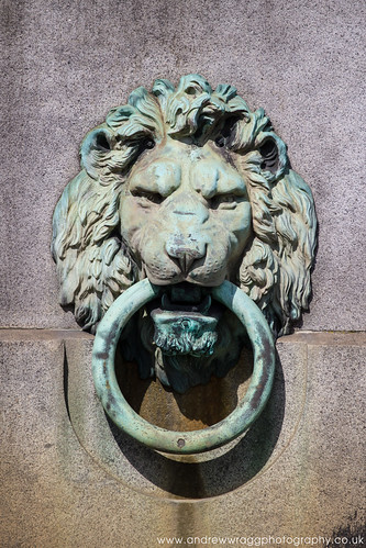 Bronze Lion by Andrew Wragg
