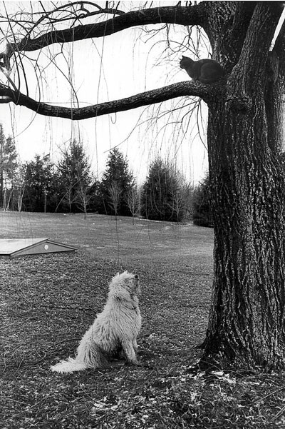 Jill Freedman, Cat, Dog, Tree,  Connecticut, 1973