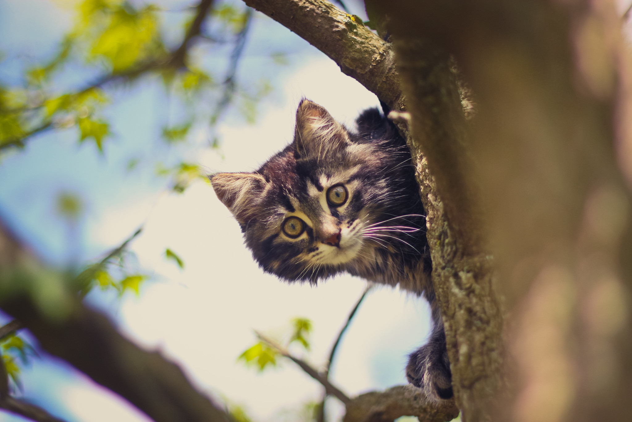 arbre chat naturel flickr photo sharing. Black Bedroom Furniture Sets. Home Design Ideas