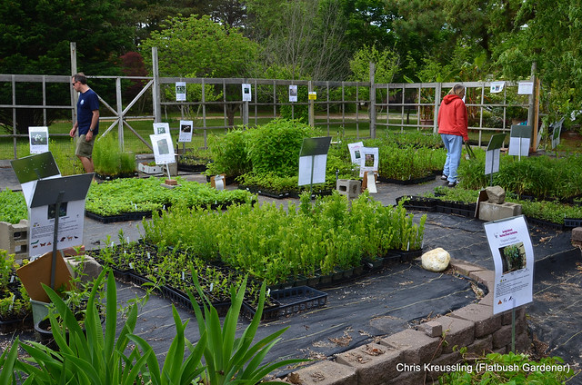 Long Island Native Plant Initiative (LINPI) Plant Sale