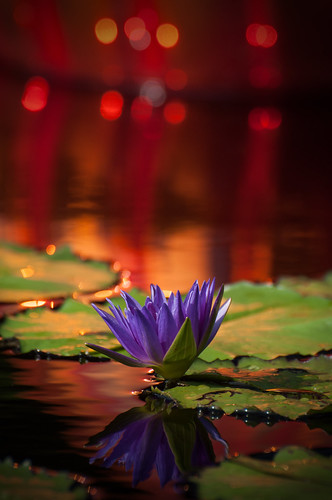 Lily Chihuly Glow by Jeff.Hamm.Photography