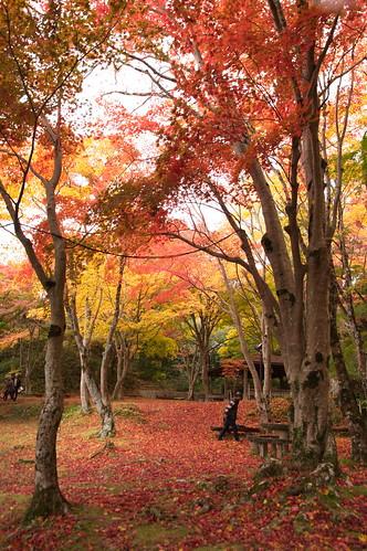 【写真】2012 紅葉 : 笠置山もみじ公園/2020-05-28/IMGP6141