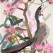 Red Wattlebird, pink eucalypt