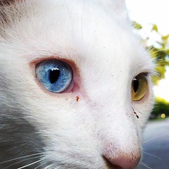 met this friendly #cat with cool #eyes this morning