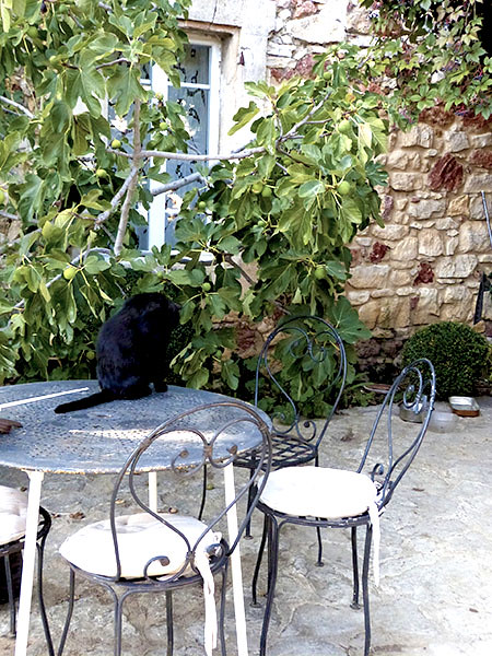 le chat sur la table