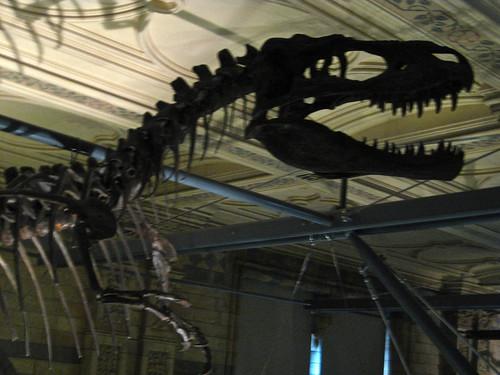 Dinosaur, Natural History Museum
