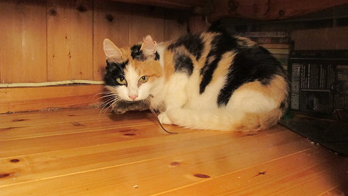 Calico-kitty Mouse Disposal Service by Kriatyrr