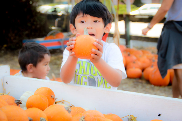 Pumpkin_2013-26