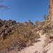 Trailside Manzanita (Arctostaphylos)