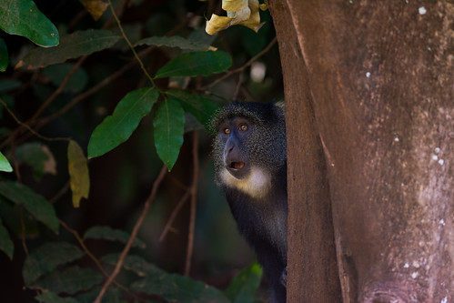 park blue lake animal tanzania monkey national planet manyara