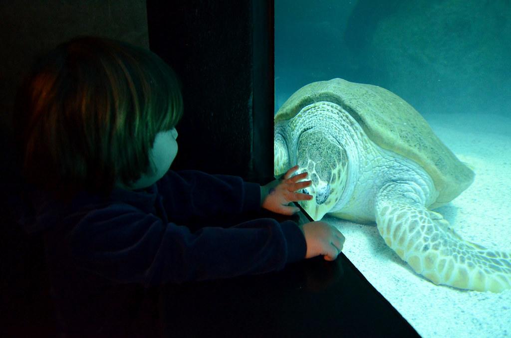 boston // new england aquarium