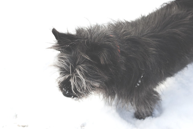 mabel in the snow