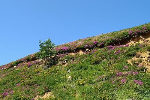 Les Pyrénées - Flowery Hilltop