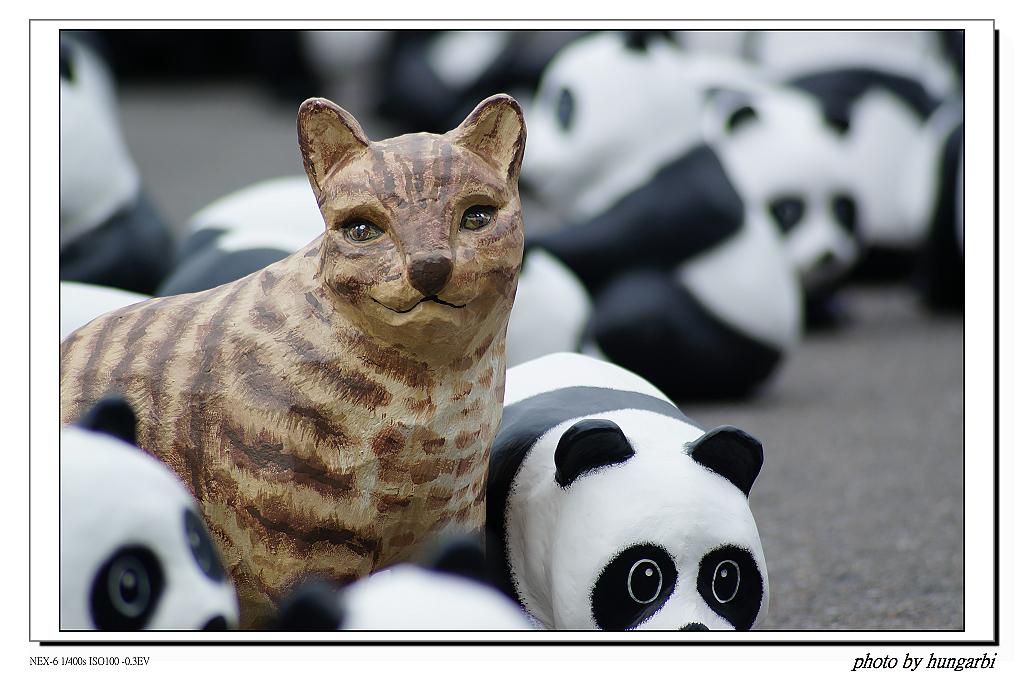 1030301熊貓黑白拍!