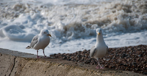 Gulls on the groyne