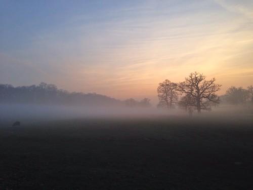 sunset mist tree fog wiltshire corsham corshampark uploaded:by=flickrmobile flickriosapp:filter=nofilter