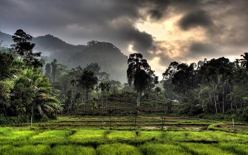 srilanka sinharaja sinharajarainforest sinharajaforestreserve weddagala bluemagpielodge