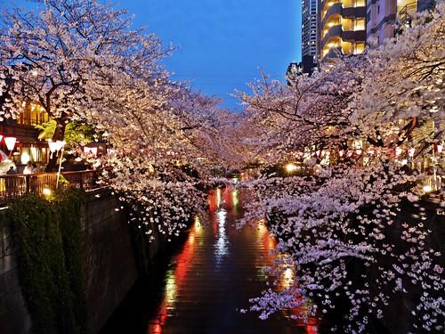Sakura 2014 Meguro River