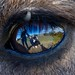 Marisa & I reflected in the eye of a wallaby by Wade Tregaskis