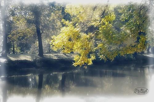 park autumn light lake nature water colors yellow landscape shine artphoto