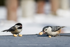 """""""Get Away From My Peanut!!"""""""